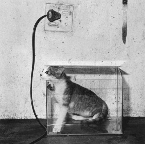 Roger Ballen, Cat in fish tank, Silver Gelatin Print, 40cm x 40 cm, 2000